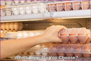 Shopping for the Right Eggs, White or Brown.
